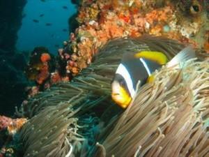 Amazing Marine Life: Underwater Adventures, Bazaruto