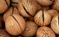 Coconut Husks used to filter Vivid Vodka