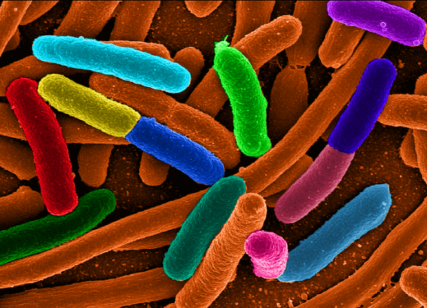 E.Coli : deadly e.coli deemed mutant super-bug