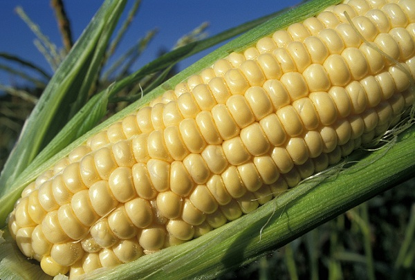 US Ends Ethanol Tax Break; Brazil Sees Opening