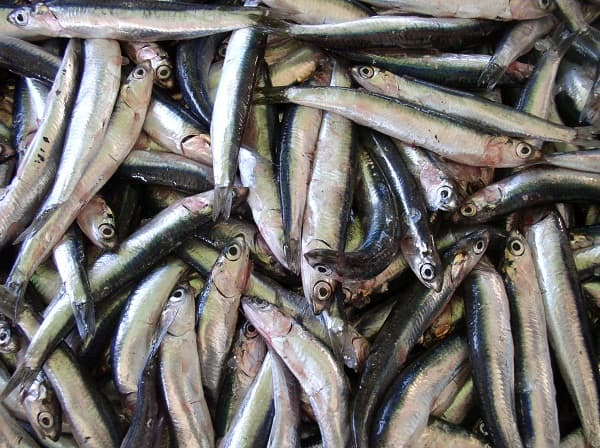 Sharp Rise in Anchovy Price Causes Chain Reaction in Food Industry