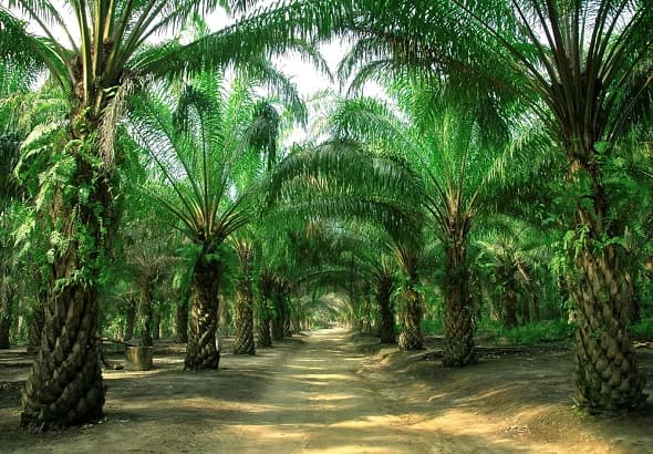 'Palm Oil Industry: Exploring Business Opportunities for Smallholders & Sustainable Production'