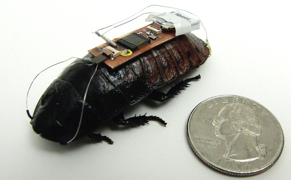 Cockroach 'Biobots' To Help Find Survivors By Sound During Rescue Operations