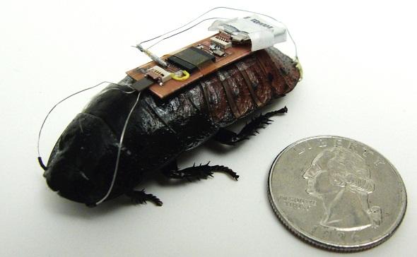 Cyborg Cockroaches Developed by North Carolina University