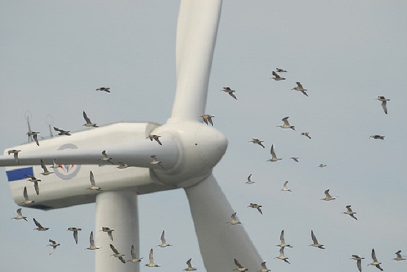 Advocacy group urges to have wind turbine rules to protect birds and other species