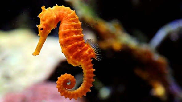 Robot Researchers Develop a 3D-Printed Seahorse Model