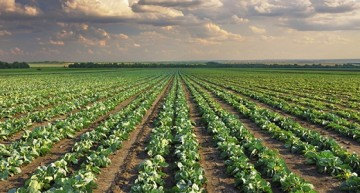 Will precision agriculture safeguard farmers of developing countries?