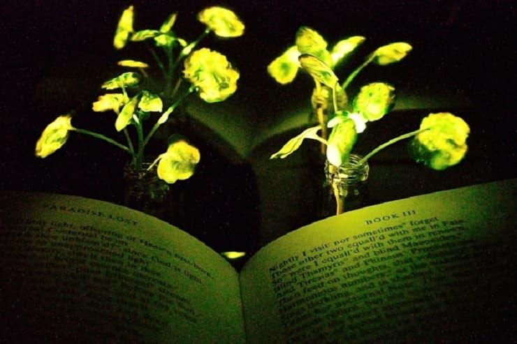 glowing-plants