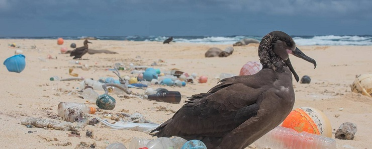 Ocean Plastic Startup