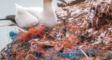How can biodegradable plastic solve the plastic pollution problem?