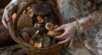 'Magic Mushrooms' are better than Antidepressants, study finds