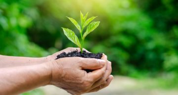 Top Global Eco-friendly Companies with the Best Green Initiatives
