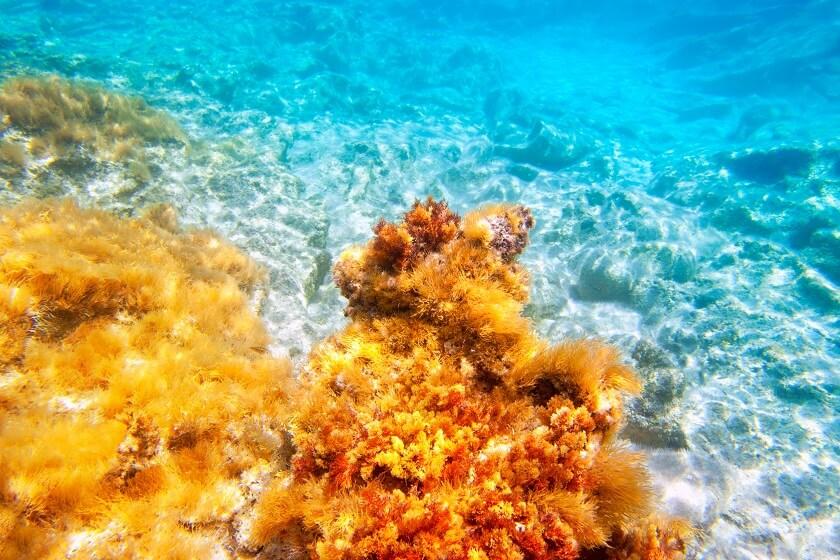 kelp - carbon sinks