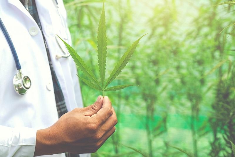 Latin America cannabis market