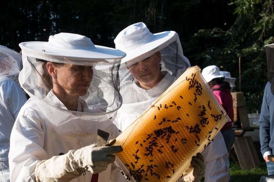 Bybi - harvest [Female Beekeepers]