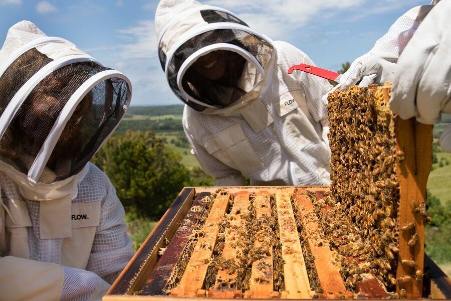 Flow BeeJacket Mesh - Beekeeping