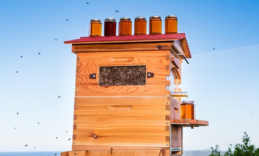 Honey Harvest - Sky replacement - Flow Hive Classic