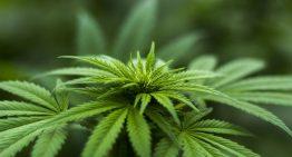 Surge In Demand for Marijuana during Lockdown Favors Pot Stocks