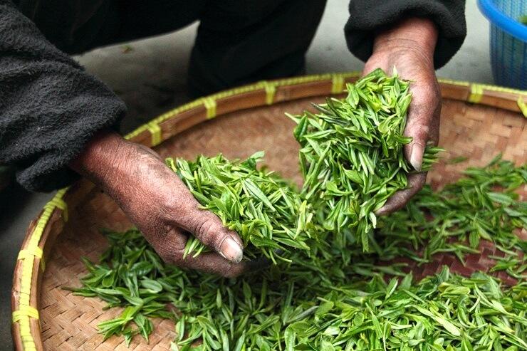 panda-dung-teas expensive most
