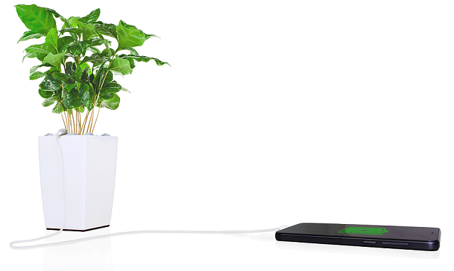 Eco-Friendly Business Trends in 2016