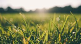 No need to wait for a Million years to Convert Grass into Biofuel