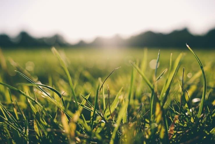 convert grass into biofuel